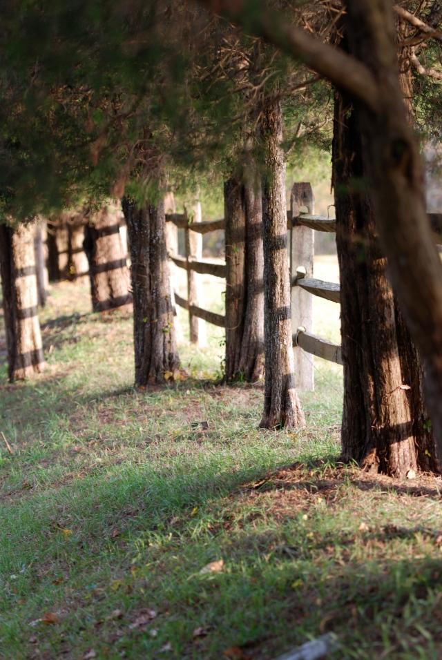 along fence