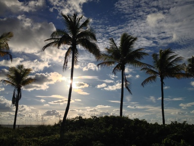 morning palms